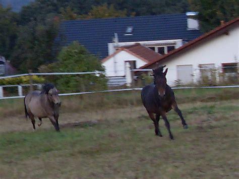 pferde suchen ein neues zuhause mehrere pferde und ponys suchen ein liebevolles zuhause in
