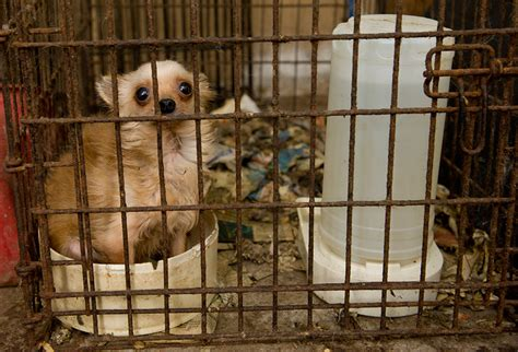 puppy mill don t buy into puppy mills animal sheltering by