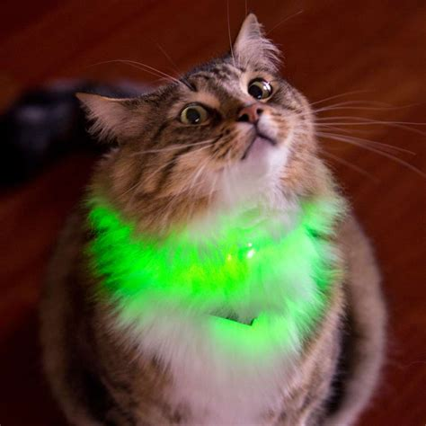 lights cat light up your pet with glowby collar bandz bright