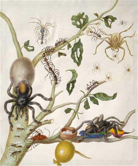 libro natural history painting wetenschap kunst politiek 187 blog archive guavenzweig maria