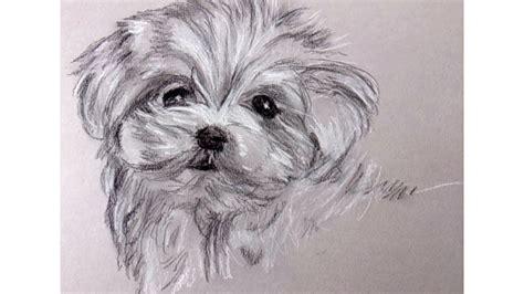 imagenes a lapiz carbon como dibujar un perrito con carboncillo y lapiz carbon