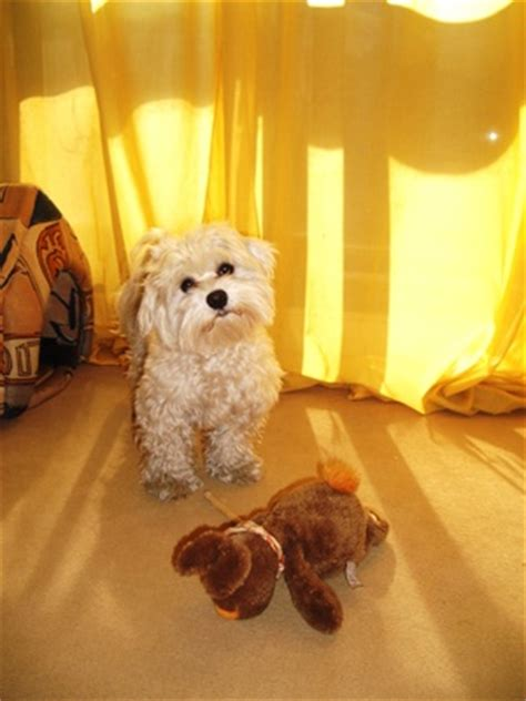 home remedies for dog peeing in house home remedies for dog urine removal dog care the daily puppy