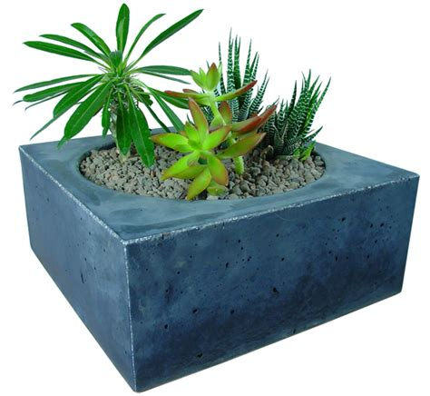 Planter Pics by Succulent Planter By Massif Concrete Concrete Planters