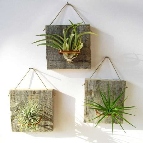 wall mounted air plants set of 3