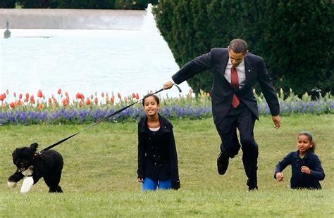 bo the white house dog malia obama and bo obama photos photos the white house debuts the obamas new dog bo