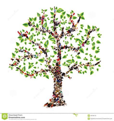arbre g 233 n 233 alogique illustration stock image 49768119