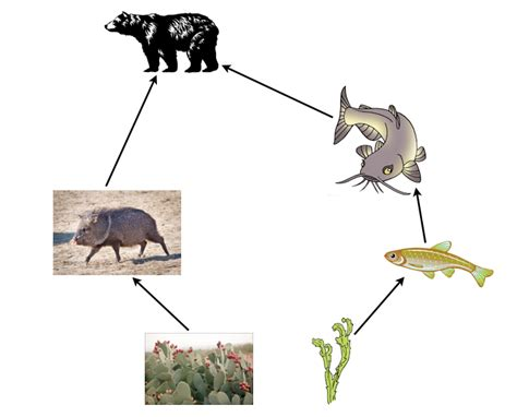 grizzly food chain diagram food web