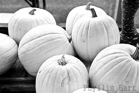 black and white pumpkins a place to hang my pictures the pumkin and squash weekend
