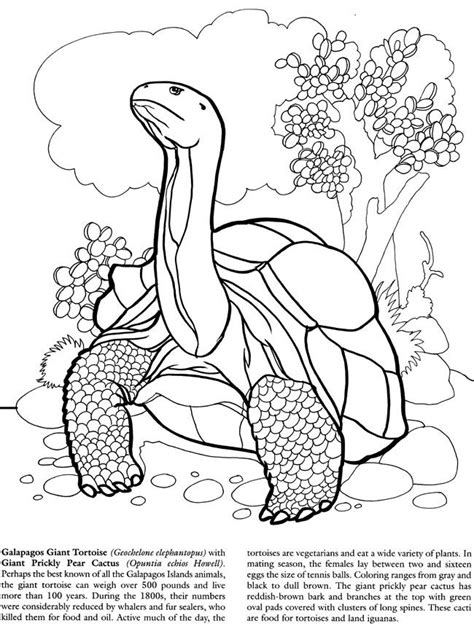 tortoise coloring kids coloring