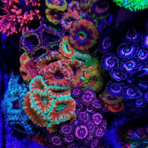 how much are black lights img 20161028 192702 jpg coral black light in the