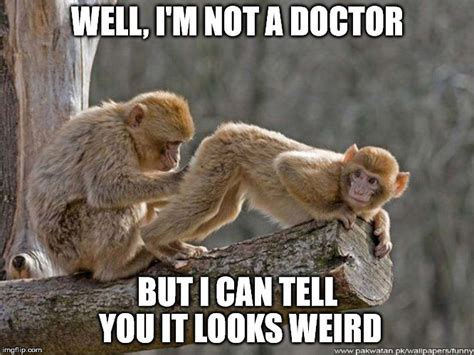 Funny Monkey Meme - funny monkey memes related keywords funny monkey memes