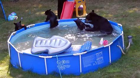 Bears Backyard Pool Bears Swimming In Backyard Pool Backyard Design Ideas