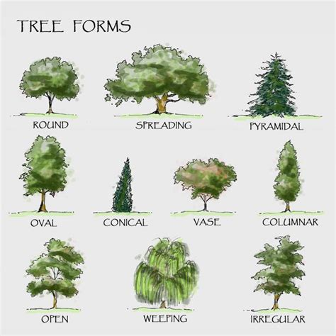 types of trees 25 best ideas about landscape architecture drawing on