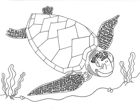 loggerhead sea turtle drawing