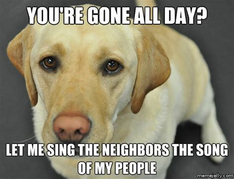 Labrador Meme - black yellow chocolate labs puppies car pictures