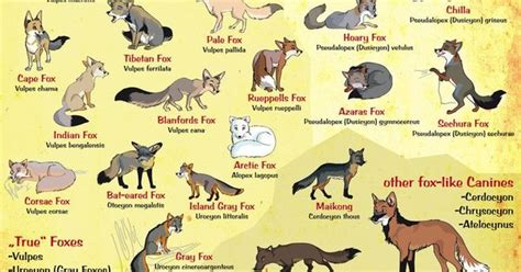 fox breed fox breeds posters animals and foxes