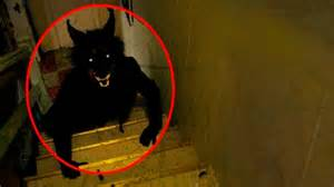 25 Mysterious Creatures Caught On Tape Youtube 5 mysterious creatures caught on camera amp spotted in real