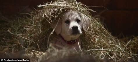 Its Out There For A Pup From The You Are A Photo Pool by Budweiser S Bowl 2015 Commercial Shows Lost Puppy S