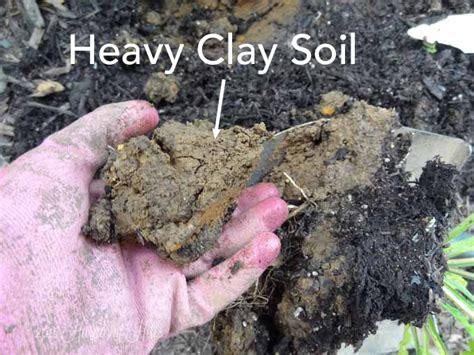 vegetable garden clay soil best garden fertilizer for clay soil 28 images 10 best