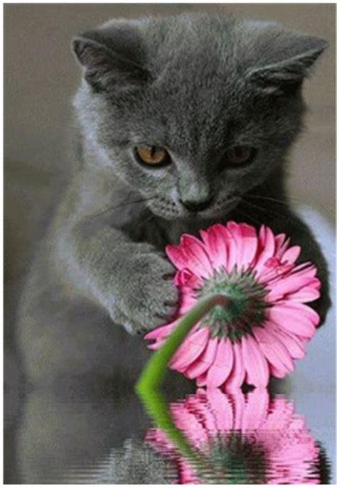 buitenspeelgoed katten bol diamond painting kat met bloem speelgoed