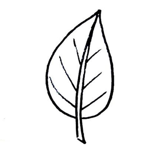 Simple Leaf Template by Leaf Templates For Kid S Crafts