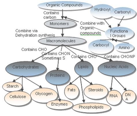 Nucleic Acid Concept Map Worksheet Answers