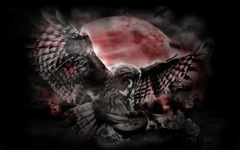 wallpaper dark bird midnight flight the night terror wallpaper and background