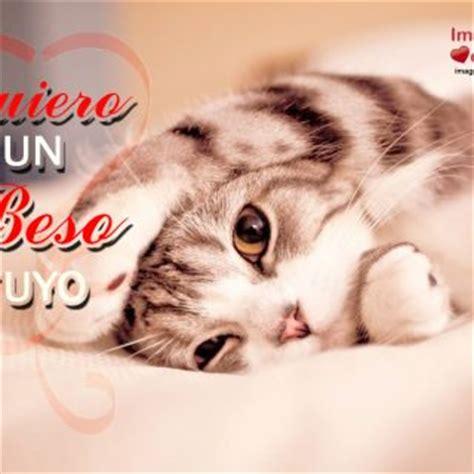 imagenes lindas de amor de gatitos im 225 genes de gatitos descarga gratis