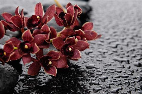fiori dei morti 4 fiori per la commemorazione dei defunti pollicegreen