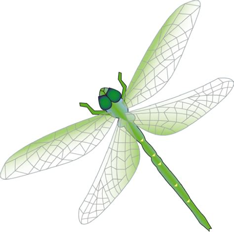 dragonfly clipart fly clip at clker vector clip
