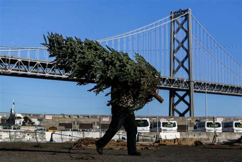 christmas tree lots in san franciso prices for real trees rise amid nationwide shortage san francisco chronicle