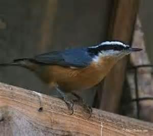 32 best ohio birds images on pinterest columbus ohio