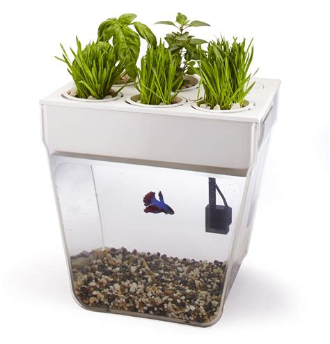 Back To The Roots Water Garden Grow Fish Plants Home Eco Fish Tank Planter