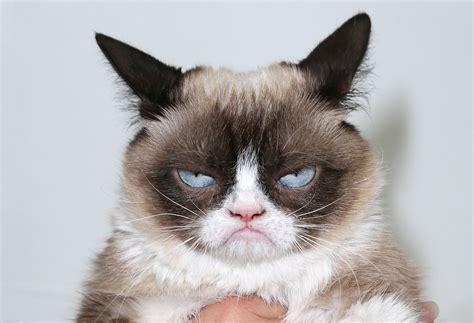 grumpy cat goodbye grumpy cat hello lil bub