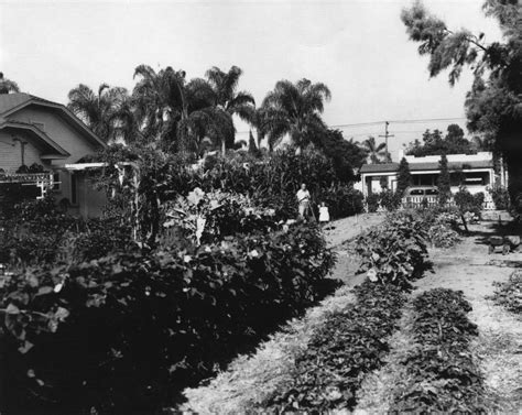 Victory Garden Ww2 by The Grove Victory Gardens Then Now