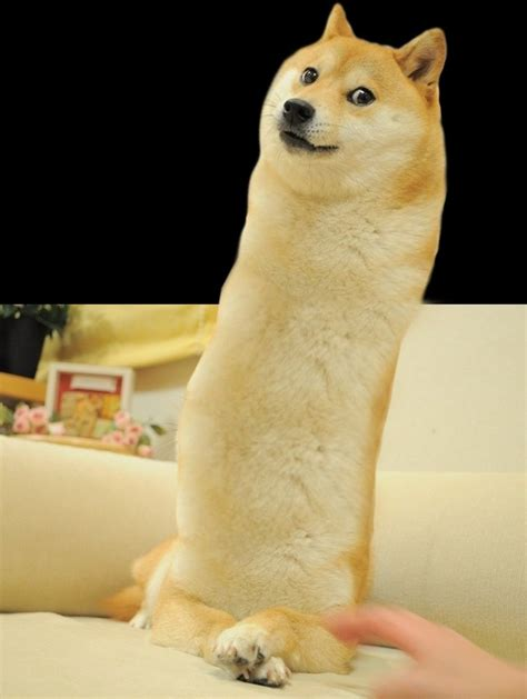 Doge Meme Original - doge meme google search doge pinterest doge doge