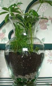 how to make glass container terrariums