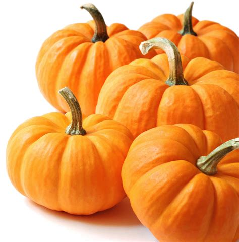 thanksgiving pumpkin free large images
