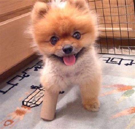 fuzzy puppies fuzzy best pictures