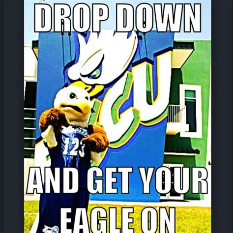 Florida Gulf Coast Mba by 1000 Images About Fgcu On Florida Eagles