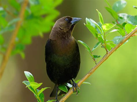 wallpaper dark bird black birds wallpapers entertainment only