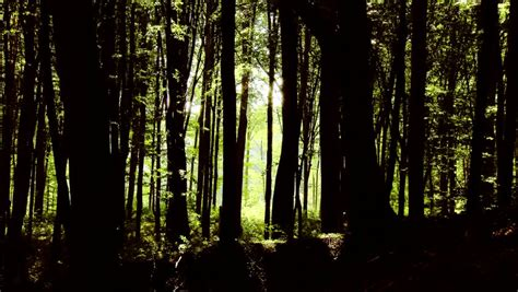 film fantasy definicja 4k fairy tale magic forest fantasy deep woods with