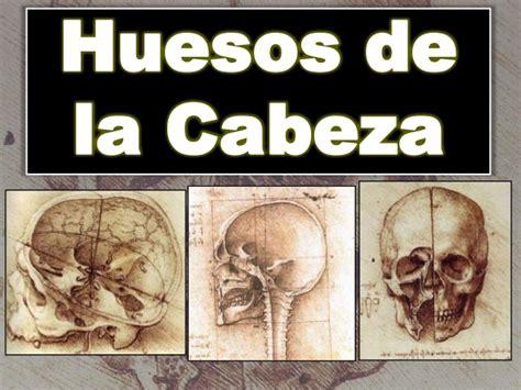 de la cabeza a 0060513136 huesos de la cabeza