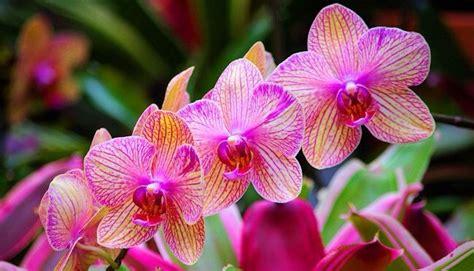 amazon rainforest orchids www pixshark com images orchids in the amazon rainforest a walk in the