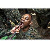 Marine Drinks The Blood Of A Cobra During Jungle Survival