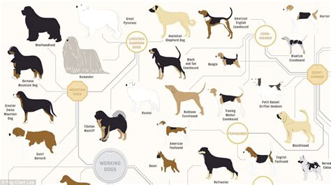 different type of dogs the family tree of dogs infographic reveals how every breed is related daily mail