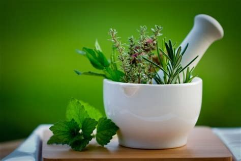 Indoor Spice Garden by Herbal Medicine Find Training Amp Therapy Careers