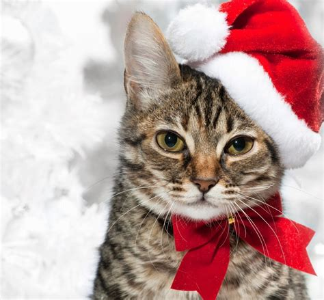 selected christmas excellent cakes merry christmas latest cat happy  year picture gallery