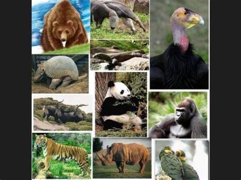 imagenes animales peligrosos lista los animales mas peligrosos del mundo