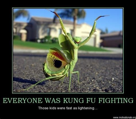 Everybody Was Kung Fu Fighting by Everybody Was Kung Fu Fighting Humor